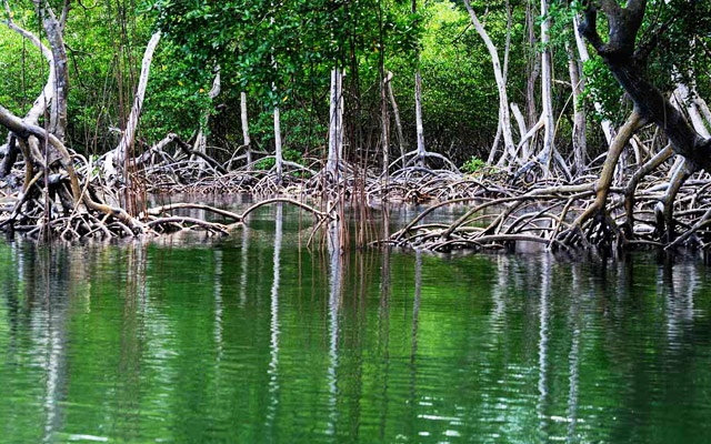 Samana Day Trips to Los Haitises National Park Mangroves.